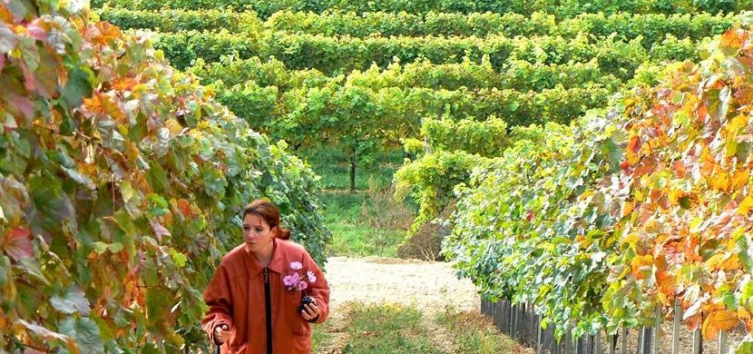 Winzerhof Scheit - Unsere Weingärten